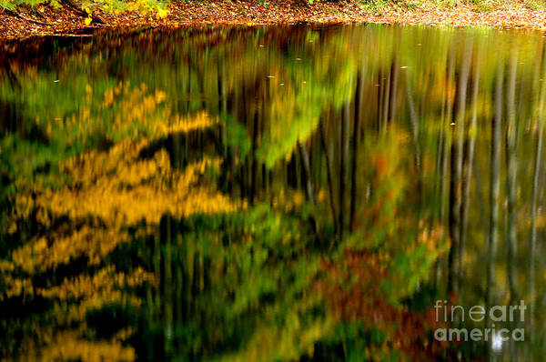 Photograph - Reflections by Thomas R Fletcher