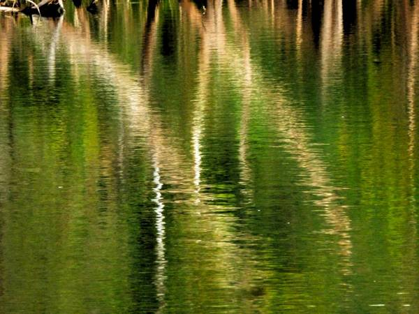 Photograph - Reflective Impressionism by Beth Akerman