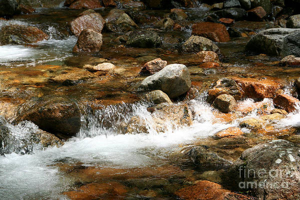 Photograph - Refreshing by LR Photography