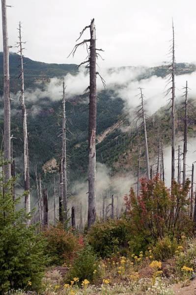 Wall Art - Photograph - Regenerating Forest, Washington, Usa by Bob Gibbons