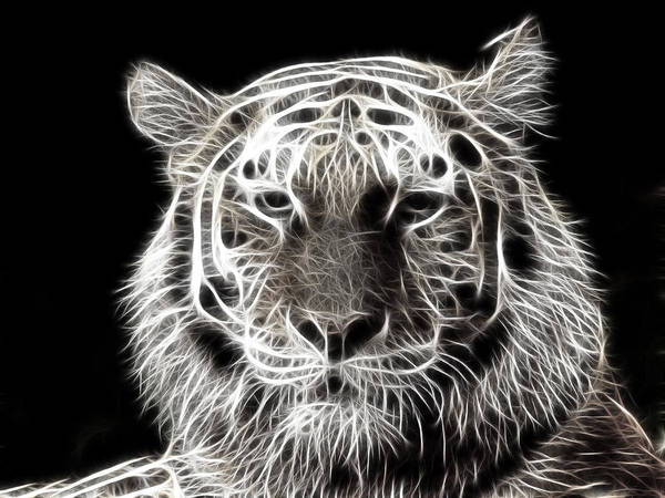 African Tiger Wall Art - Digital Art - Relaxed by Tilly Williams