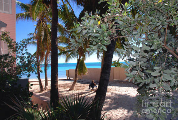 Photograph - Relaxing Dog's Beach In Key West by Susanne Van Hulst