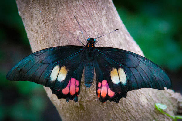 Photograph - Resting Butterfly by David Patterson
