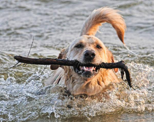 Fetch Photograph - Retriever by Wade Aiken