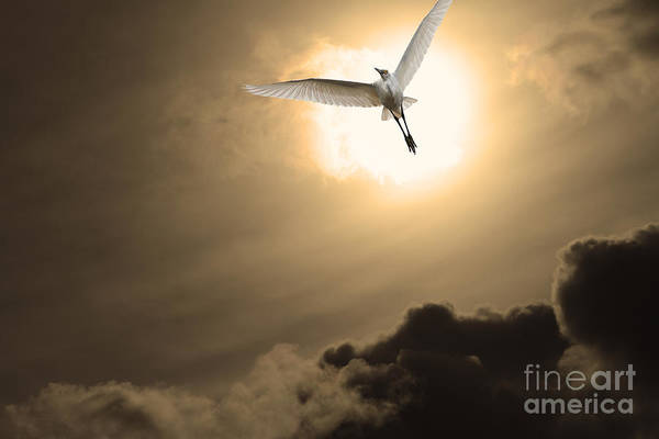 Photograph - Return To Eternity . Gold Cut by Wingsdomain Art and Photography