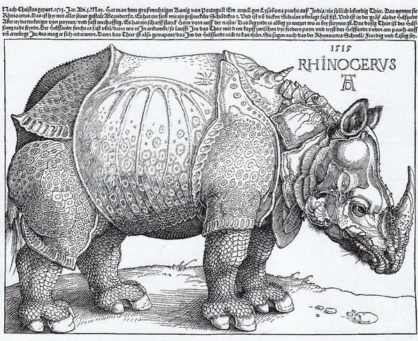 German Renaissance Drawing - Rhinoceros - Woodcut by Pg Reproductions
