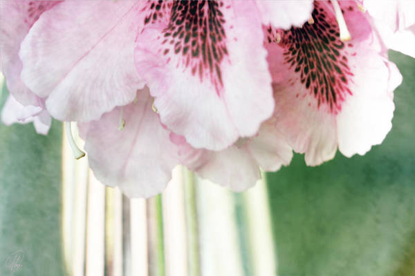 Wall Art - Digital Art - Rhododendron Refraction by Margaret Hormann Bfa