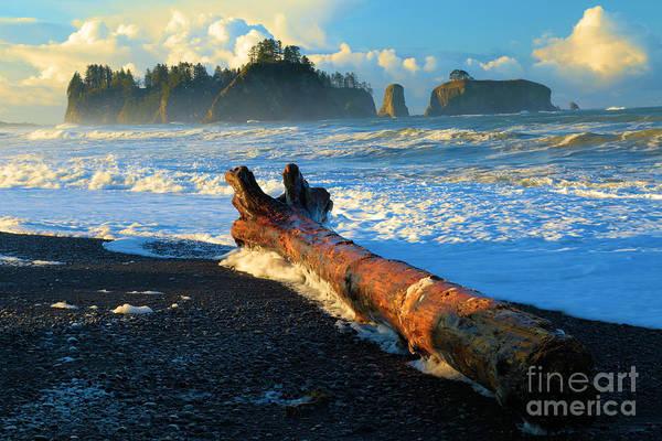 Photograph - Rialto Beach Drift Log by Adam Jewell