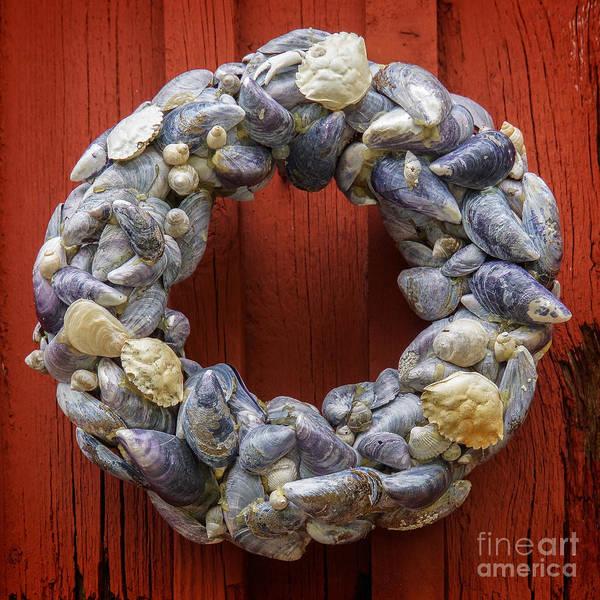 Mussel Wall Art - Photograph - Ring Of Mussels by Lutz Baar
