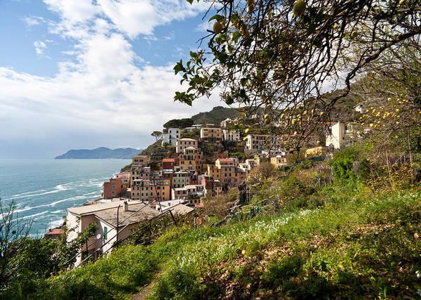Ocean Grove Photograph - Riomaggio Grove by Mike Reid