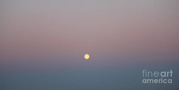Photograph - Rising Moon by Donna L Munro