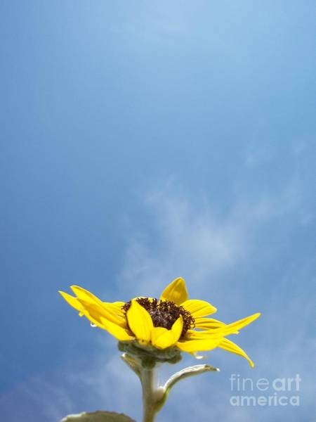Wall Art - Photograph - Rising To The Blue by Jack Norton