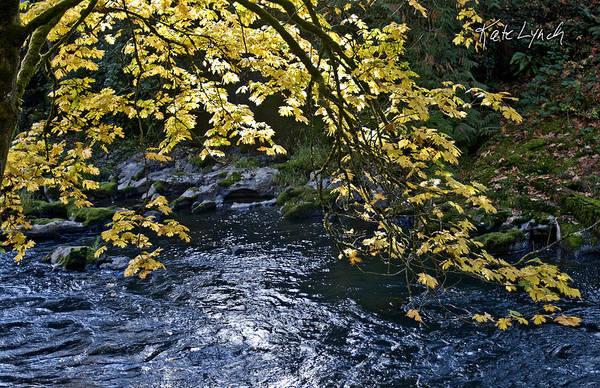 Photograph - River Glow II by Kate Lynch