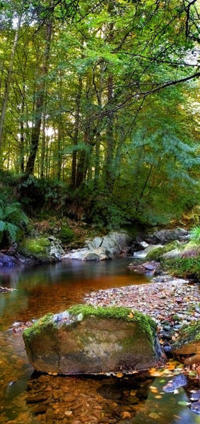 River In Cawdor Big Wood Art Print