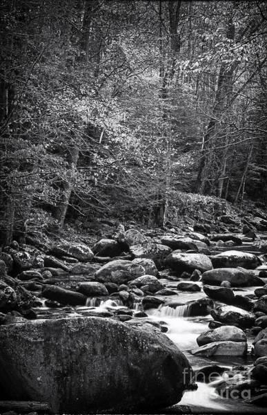 Photograph - River Rocks by David Waldrop