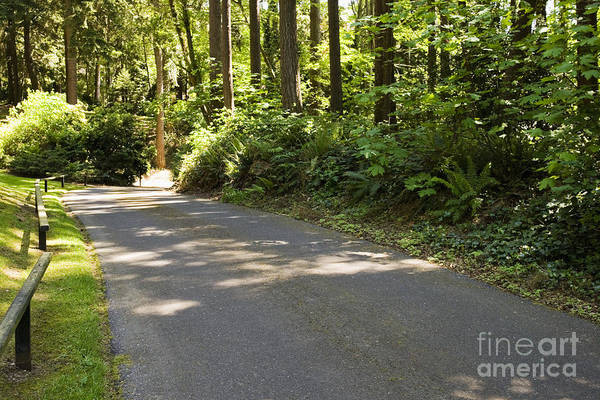 Backwoods Wall Art - Photograph - Road In Forest by Andersen Ross