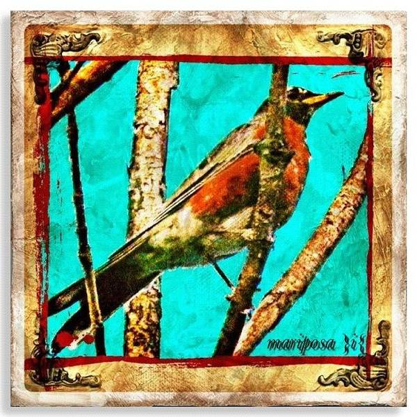 Robin Perch  Art Print