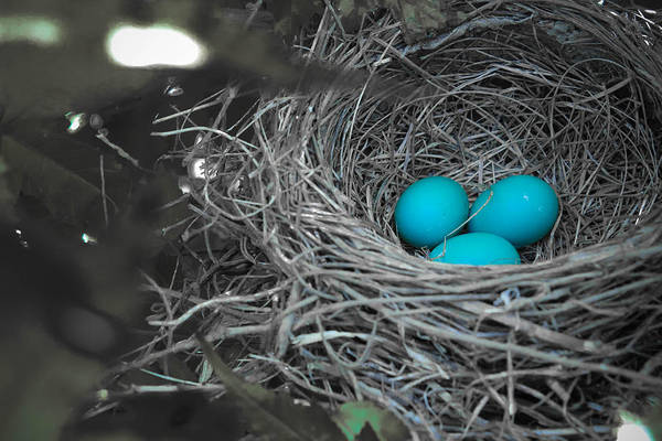 Robin Egg Blue Photograph - Robin's Eggs In Blue by Christy Patino