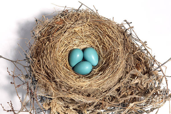 Wall Art - Photograph - Robins Nest With Eggs by Ted Kinsman