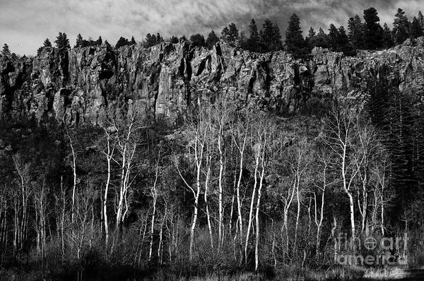 Photograph - Rock Face And Aspen by David Waldrop