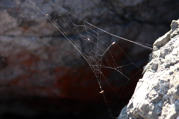 Spider Rock Photograph - Rock Web by Gunz The Great