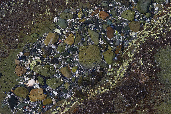 Photograph - Rocks And Barnacles by David Kleinsasser