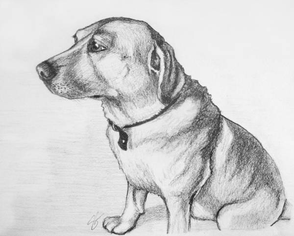 Coolidge Drawing - Romeo by Sara Coolidge