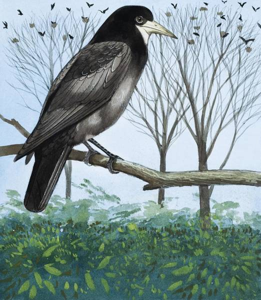 The Rookery Wall Art - Painting - Rook by English School
