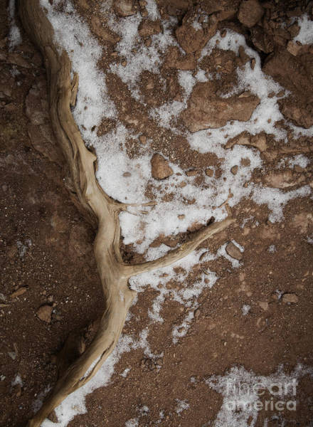 Photograph - Root And Snow by David Waldrop