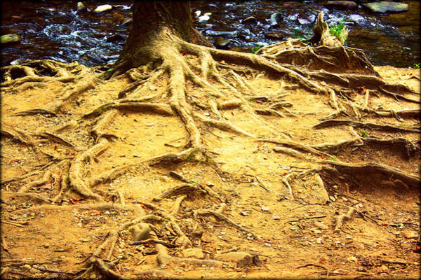 Photograph - Root Of Nature by Susie Weaver
