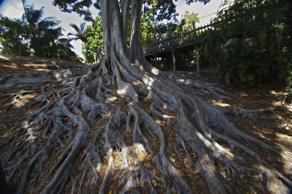 Photograph - Roots by Jeremy McKay