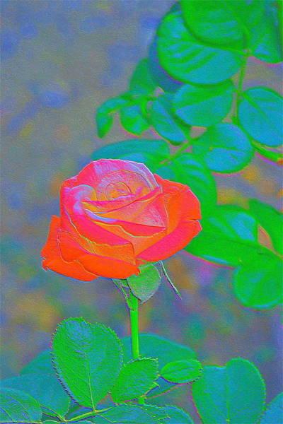 Wall Art - Photograph - Rose 91 by Pamela Cooper