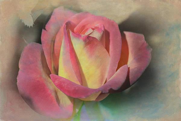 Filoli Photograph - Rose Avril by Linda Dunn