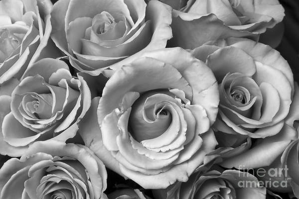 Photograph - Rose Bouquet In Black And White by James BO Insogna