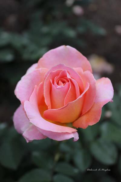 Photograph - Rose Garden by Deborah Hughes