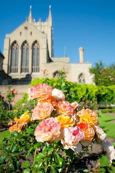 Wall Art - Photograph - Rose Garden by Tom Gowanlock