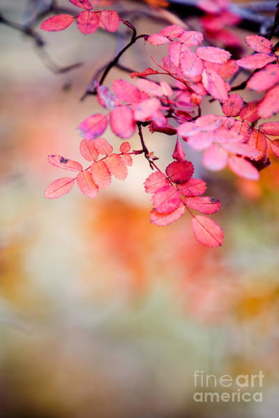 Wall Art - Photograph - Rose In Autumn by Kati Finell