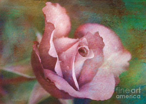 Photograph - Rose Of Romance by Deborah Benoit