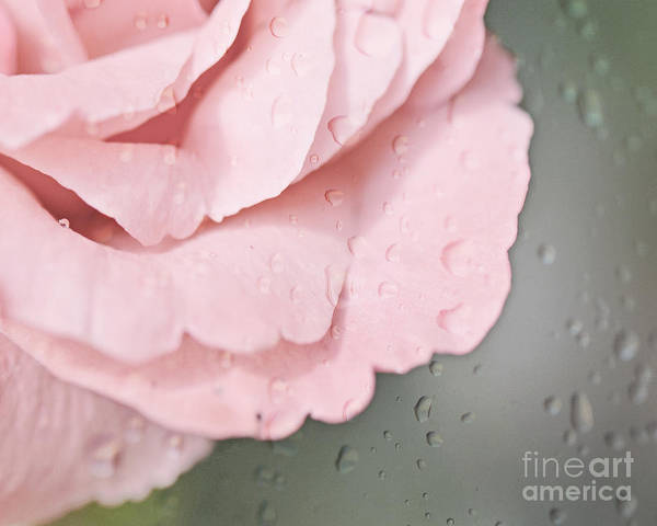 Photograph - Rose Rain by Traci Cottingham