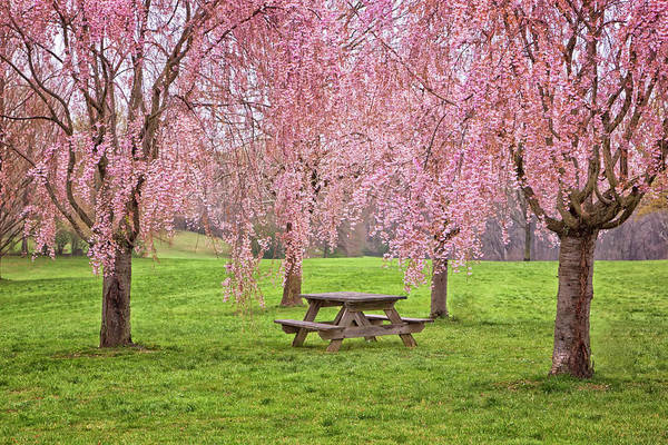 Photograph - Rose Tree Table by Tom Singleton