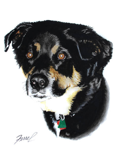 Rottweiler Painting - Rottweiler Mix by Ferrel Cordle