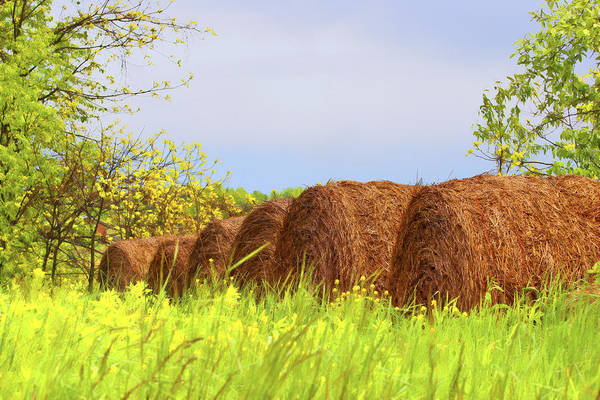 Straw Photograph - Round Bales by Tom Mc Nemar