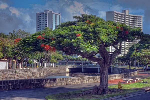 Photograph - Royal Poinciana Tree by Dan McManus