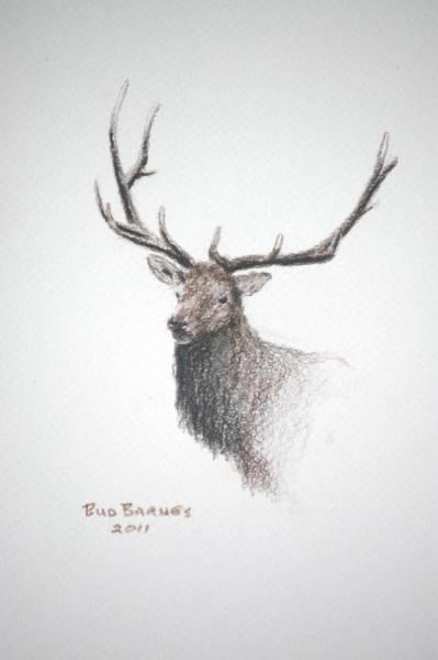 Elk Mountain Drawing - Royalty by Bud  Barnes