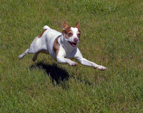 Photograph - Running Dog by Frank Winters