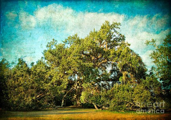 Coast Live Oak Photograph - Ruskin Oak by Joan McCool