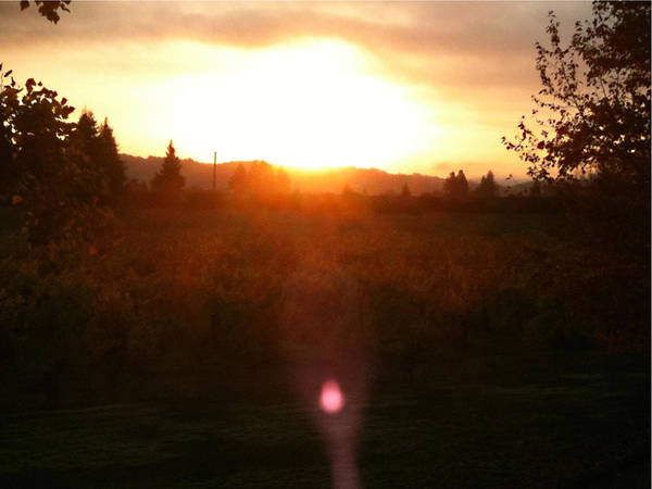 Photograph - Russian River Sunrise by Kathy Corday