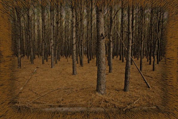 Photograph - Rust Forest by M K Miller