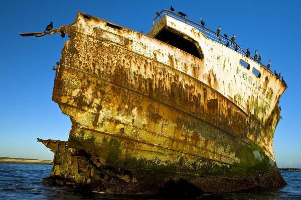 Phalacrocoracidae Photograph - Rusting Shipwreck At Low Tide by Peter Chadwick