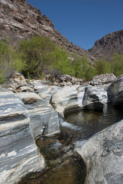 Sabino Canyon Art Print